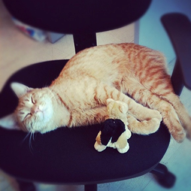 Cat by Anna Zyabreva