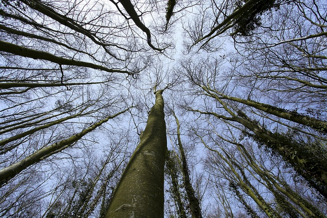 Looking Up.... by TRM-photography.co.uk, via Flickr