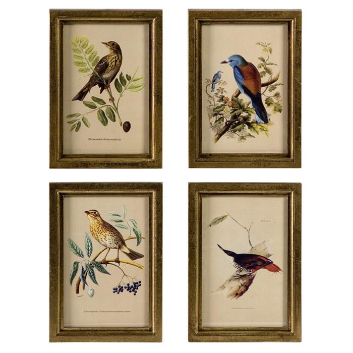 4 piece birds framed wall art set stuff i want for Bird wall art