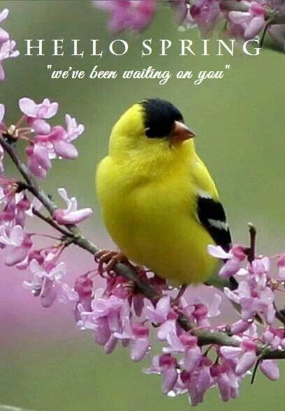 Hello Spring      Quot...