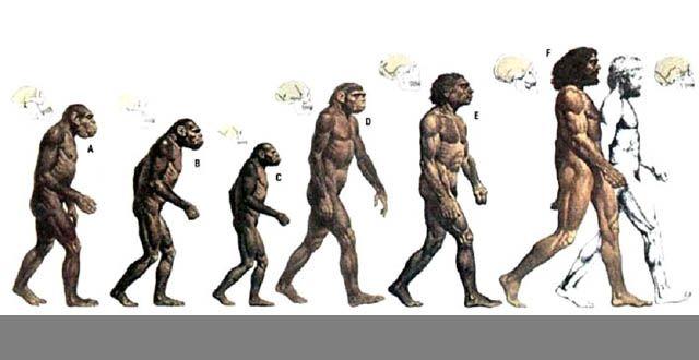 charles darwin origin of species book review