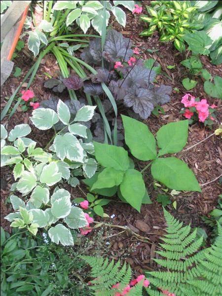 Loving Those Shade Loving Plants Gardens And Shade