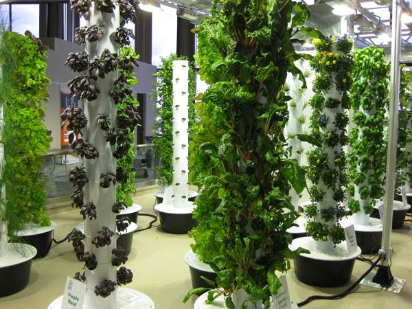 vertical gardening or aeroponics gardening gardening