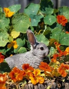 What can be put in a vegetable garden to keep rabbits and - How to keep squirrels away from garden ...
