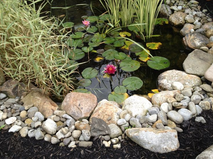 Pinterest discover and save creative ideas for Garden pond edging