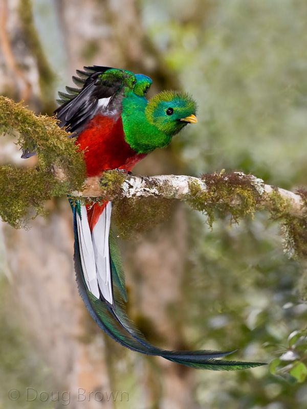 Uploaded to PinterestQuetzal In Flight