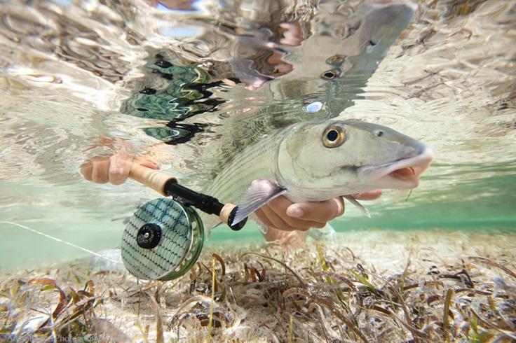 Underwater Bonefish photo by Adam Barker