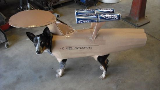USS Enterprise Dog Cosplay