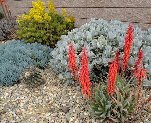 Ruth Bancroft Garden, Walnut Creek, CA