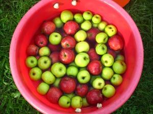Fresh Apple Salsa #superbowl appetizers | Super Bowl Party | Pinterest
