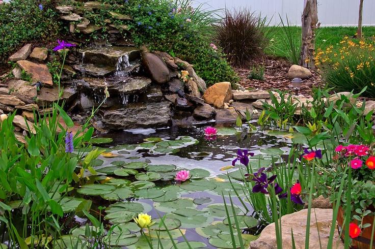 My Very Own Backyard Pond Backyard Turtle Coy Pond Pinterest
