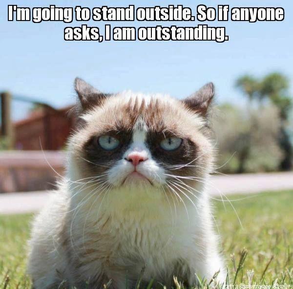 8 New Grumpy Cat Memes