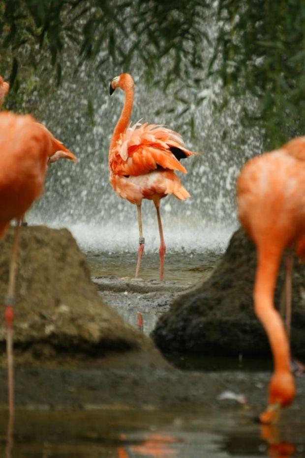 pink flamingo bird bath
