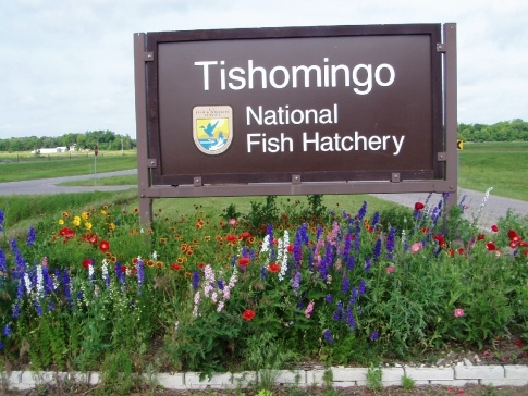 tishomingo nat fish hatchery places to see pinterest