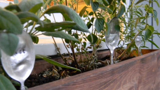 Outside My Kitchen Window- window box and herb markers