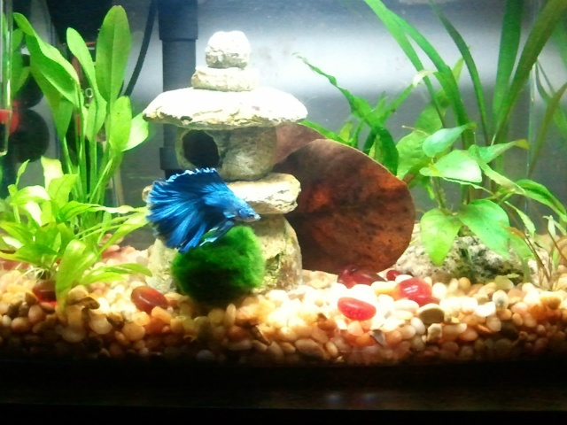 Pinterest discover and save creative ideas for Fish tank caves