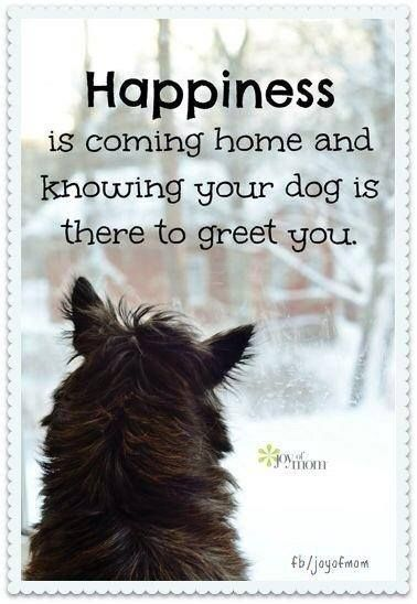 Happiness is coming home and knowing your dog is there to greet you.