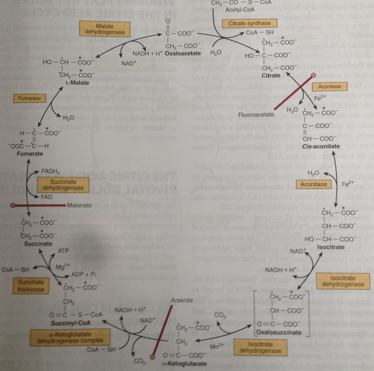 how to remember krebs cycle