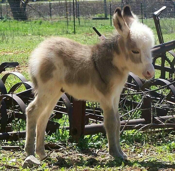 Cute Baby Donkeys