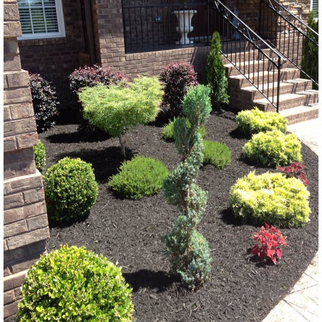 New landscaping/black mulch | Landscaping/Deck Ideas | Pinterest