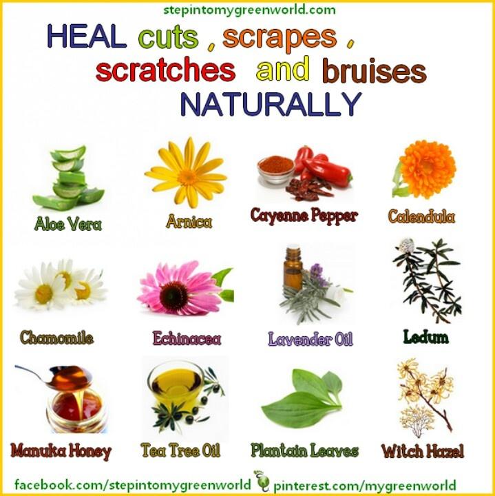 Bruises And Herbal Healing