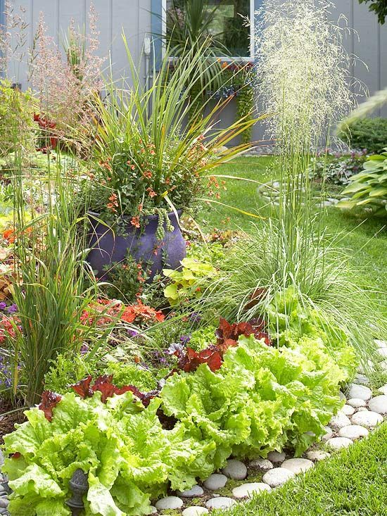 Easy guidelines for growing ornamental edibles! • Pretty lettuce border!