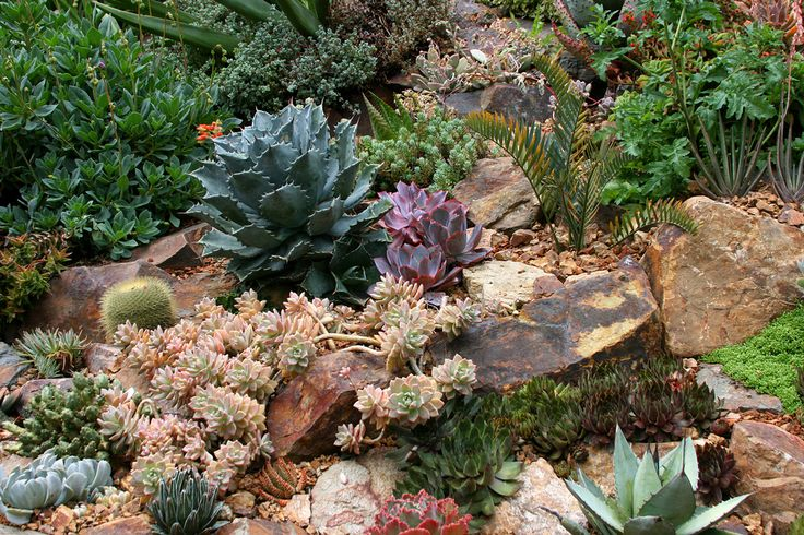 Rock garden with succulents in bay area gardening for Landscaping rocks east bay