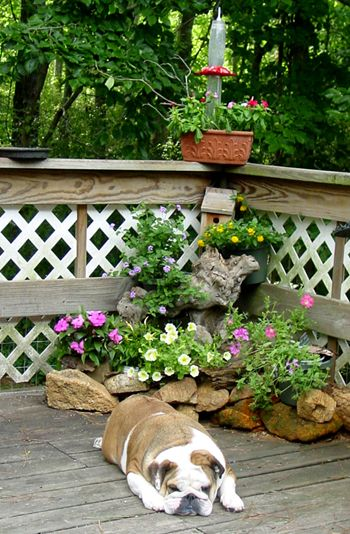 Small rock garden gardening pinterest Small rock garden