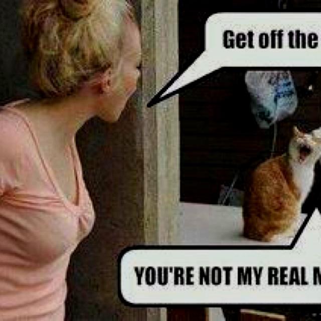 teaching cats tricks