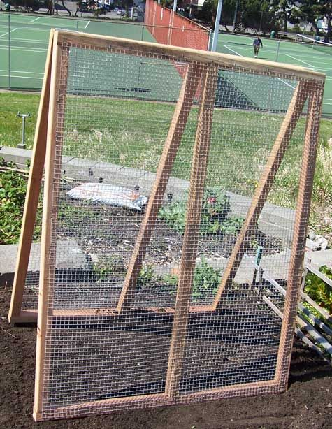 A-frame with simple wired fencing used to grow peas and cucumbers