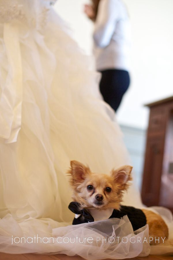 Sissy Wedding Married to Man