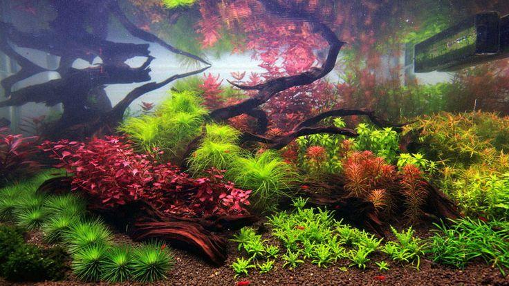 Dutch inspired Aquarium Aquarium Pinterest