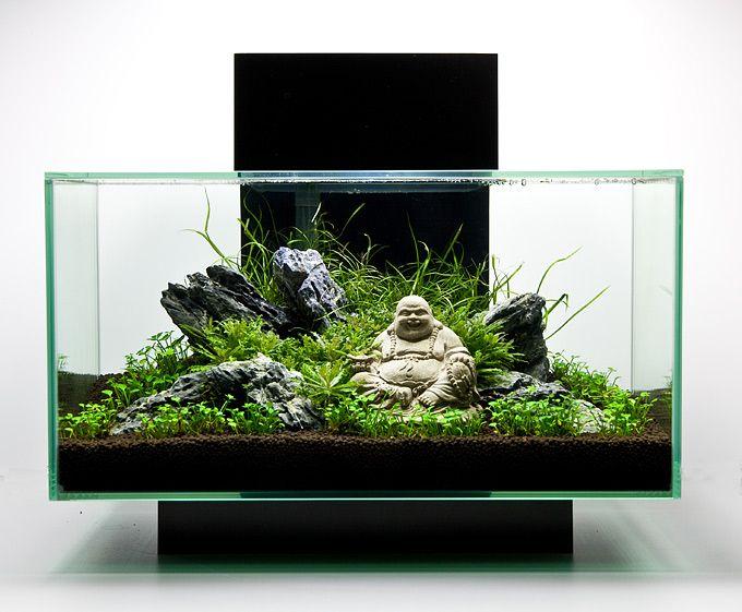 Oliver Knott - Fluvial edge 2 Aquatic Life Under Glass Pinterest
