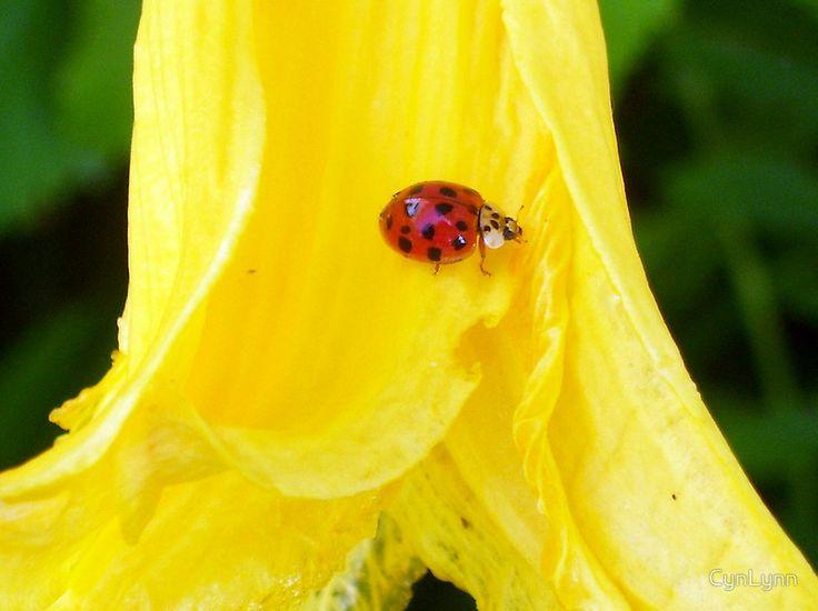Cutie on Faded Beauty | lady bugs | Pinterest