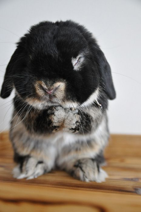 Baby bunny's got his think on.