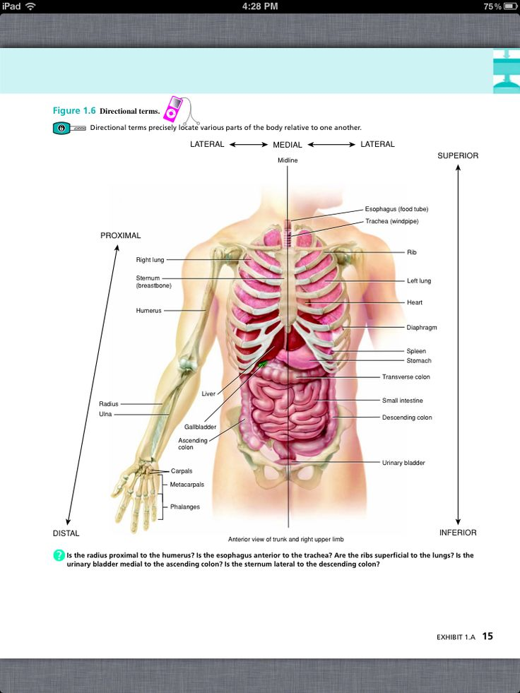 Awesome Anatomy And Physiology 101 Online Component - Human Anatomy ...