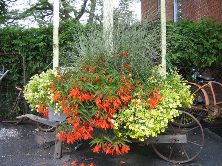 Wheelbarrow of Blooms