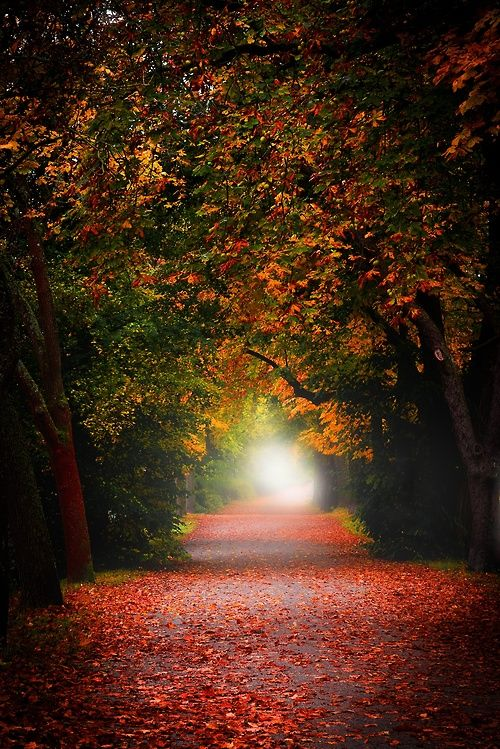 autumn cozy fall autumn pinterest