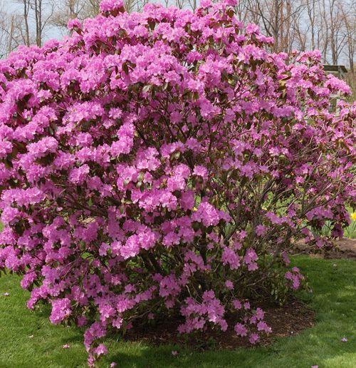 Early spring garden ideas photograph early spring for Spring garden ideas