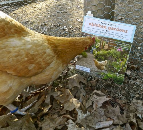 Backyard Chickens Book : love this book!  Backyard Chickens  Pinterest