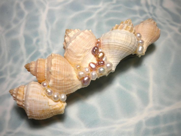 Pin by bettina mcginnis on arts and crafts pinterest for What are shells made of