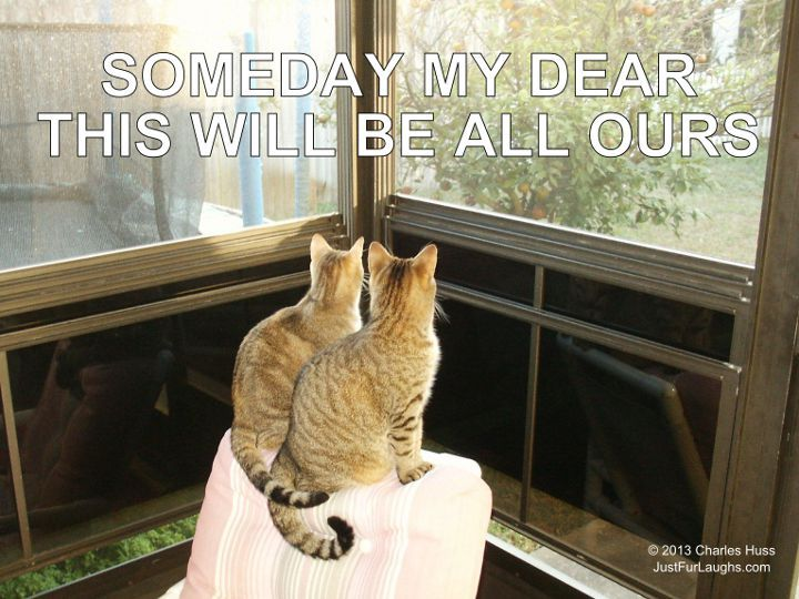 cats looking out window funny captioned animal photos pinte