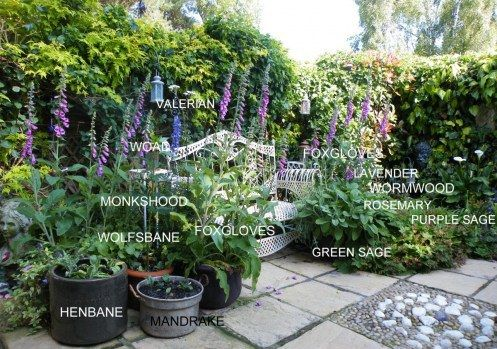 Witchs Garden Ideas Related Keywords Suggestions
