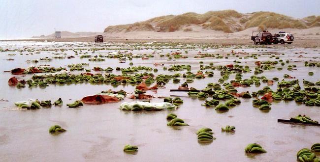 Terschelling Island Netherlands
