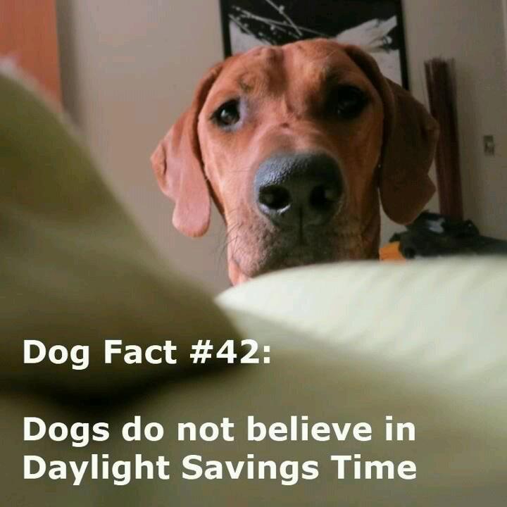 Daylight Savings Time Ends  Dog Cat