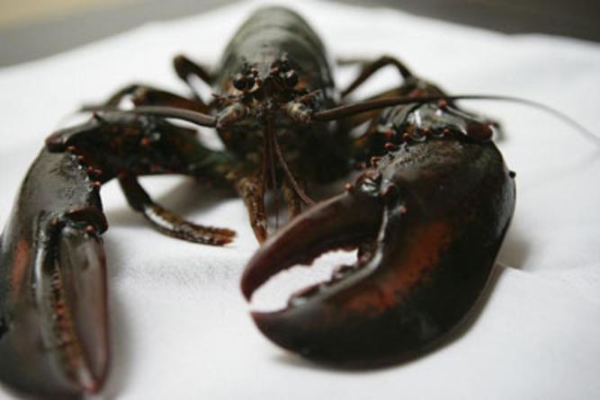 10 Best Seafood Restaurants in Los Angeles - Squid Ink