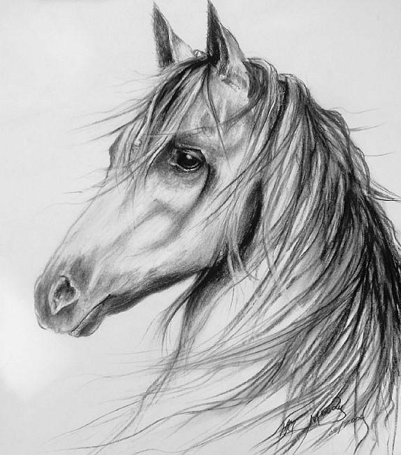 Horse Drawing Drawings Pinterest