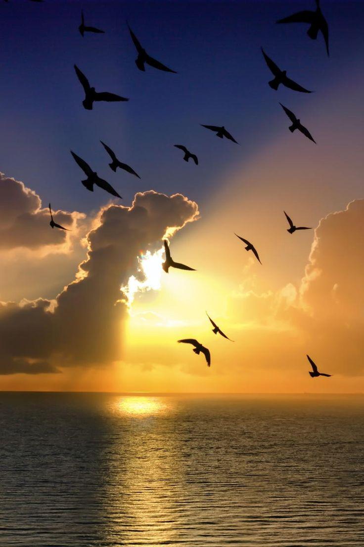 Seagulls of Dusk by Darko Festin via 500px.