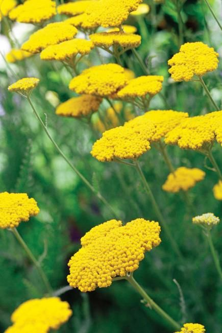 25 top easy care plants for midwest gardens for Easy maintenance perennials