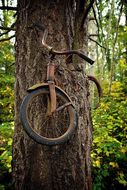 a boy left his bike chained to a tree when he went away to war in 1914. he never returned, leaving the tree no choice but to grow around the bike.   the photographer is unknown.